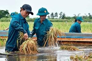 ĐBSCL: Mưa lớn kéo dài gây thiệt hại nhiều diện tích lúa