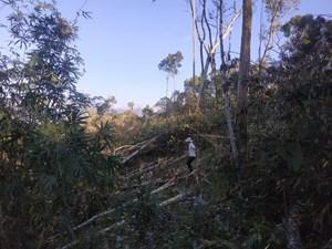 Cận cảnh khu rừng tự nhiên bị tàn phá ở Đắk Lắk