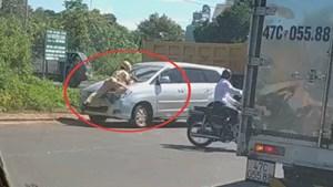 [VIDEO] CSGT nằm bám đầu xe ô tô trong lúc làm nhiệm vụ