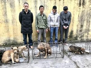 Hà Tĩnh: Bắt nhóm 'cẩu tặc' liên tỉnh