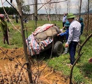 Hà Tĩnh: Sau lũ, dịch tả lợn châu Phi tái phát trầm trọng