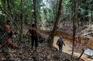 Cuộc chiến 'vàng máu' dưới tán rừng Amazon