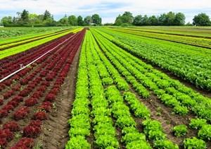 Phú Yên: Phấn đấu công nhận 15 vườn mẫu nông thôn mới
