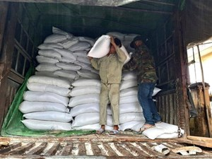 Khánh Hòa: Phân bổ hơn 2.000 tấn gạo cho các địa phương gặp khó khăn do đại dịch Covid-19