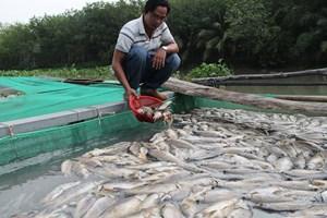 Cá nuôi trên sông Sài Gòn chết trắng, nông dân trắng tay