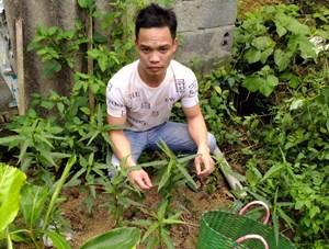 Nam Định: Biên phòng phát hiện dân trồng cây cần sa trong vườn nhà