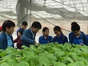 Đào tạo nghề cho lao động nông thôn cần theo kịp thị trường