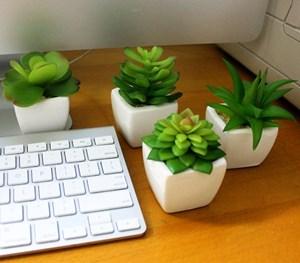 Mẫu cây nhỏ để bàn đem lại sức khỏe cho dân văn phòng