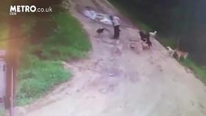 [VIDEO] Nga: Người đàn ông bị chó hoang tấn công và ăn thịt