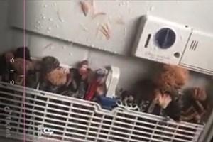 [Video] Làm sạch cọ trang điểm cho vợ bằng máy rửa bát và cái kết