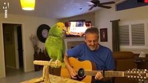 [Video] Chú vẹt có thể hát Bon Jovi, The Beatles và Coldplay