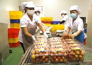Nông sản Việt chinh phục thế giới