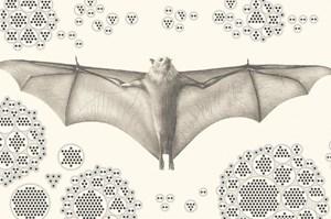 Vì sao dơi trở thành vật chủ lý tưởng cho virus gây dịch bệnh?