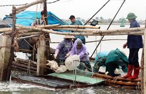 Ngư dân Nam Định đón 'lộc biển'