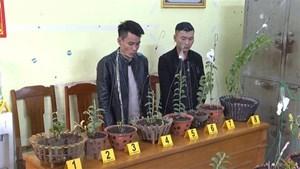Bắt giữ 2 đối tượng trộm hoa lan đột biến liên tỉnh
