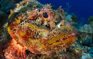 [ẢNH] Những loài sinh vật biển nguy hiểm