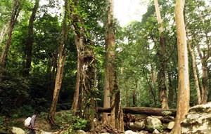 Làm gì để rừng yên?