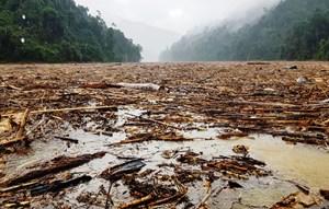 Quảng Nam, Quảng Ngãi: Sau lũ, gỗ từ đâu về?