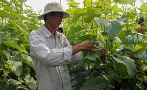 Hậu Giang: Khởi sắc ở làng 'nông thôn mới Hàn Quốc'