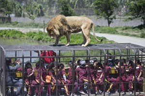 Vườn thú đảo ngược: Nơi mọi người ở trong lồng và động vật được tự do