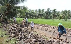 Bến Tre: Người trồng dừa gặp nhiều khó khăn do hạn mặn