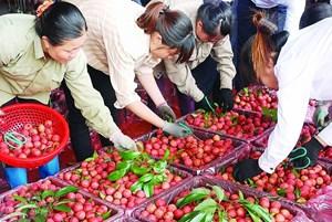 Nghi vấn nhiễm virus SARS-CoV-2 từ nông sản sang người: Bộ Nông nghiệp nói gì?