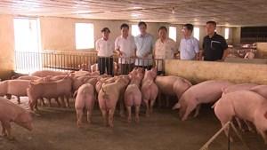 Phú Thọ: Nghiên cứu, khảo sát kết quả phát triển kinh tế trang trại