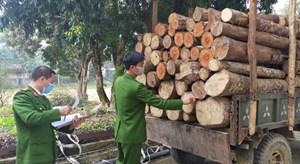 Khai thác trộm cả trăm khúc gỗ tròn để đem đi bán
