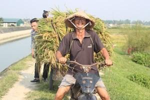 Thanh Hóa: Nông dân âm tính SARS-CoV-2 mới được đi gặt lúa