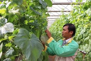 Cơ hội mới cho xuất khẩu rau quả