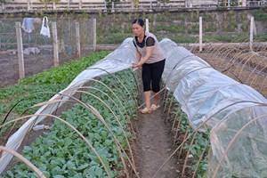 Khuyến cáo nông dân chống rét cho cây trồng