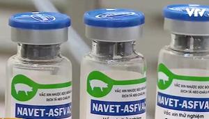 Thành lập Hội đồng khoa học quốc gia đánh giá vaccine dịch tả lợn châu Phi