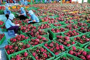 Thách thức nông sản xuất khẩu