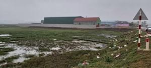Lúa chết, ruộng bỏ hoang vì ô nhiễm
