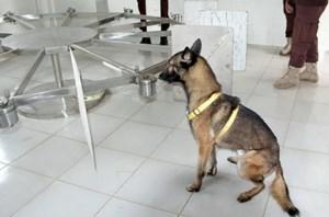 Campuchia huấn luyện chó phát hiện người mắc Covid-19