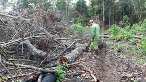 Xử lý trách nhiệm người đứng đầu 4 đơn vị để mất rừng