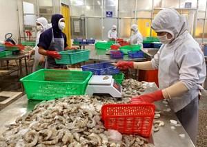 Công ty TNHH MTV Chế biến thuỷ sản xuất khẩu Thiên Phú: Tiếp sức cho người nuôi tôm