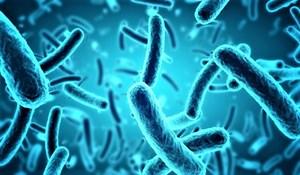 Sử dụng vi khuẩn để xử lý chất thải điện tử độc hại