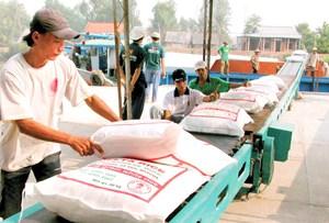 Làm thương hiệu cho hạt gạo