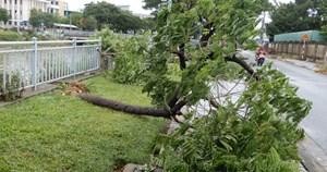 Đà Nẵng: Nhiều cây xanh bật gốc, người dân ra biển bắt cá sau bão