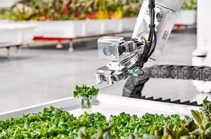 Nông nghiệp tìm cách vượt khó