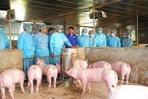 Thái Nguyên: Tìm giải pháp khống chế dịch tả lợn châu Phi