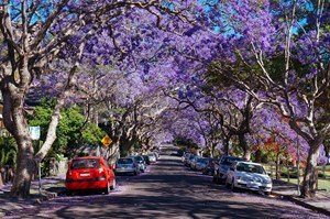 Nước Úc những ngày vắng vẻ
