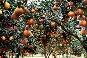 Hiệu quả những mô hình nông nghiệp hữu cơ