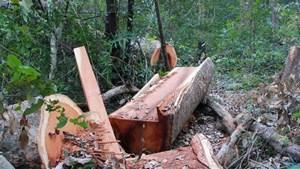 Đắk Lắk: Phát hiện vụ khai thác gỗ trái phép tại xã Hòa Lễ, huyện Krông Bông