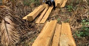 Tây Nguyên nóng chuyện xâm phạm rừng