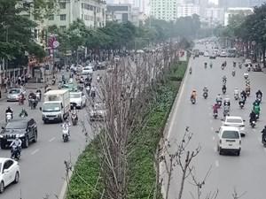 Vì sao hơn 200 cây phong lá đỏ ở Hà Nội sắp bị thay thế?