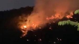 Quảng Ninh: Đám cháy thiêu rụi 5 ha rừng trồng