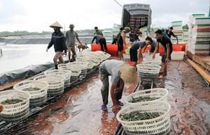 Quảng Ninh: Thêm một huyện được công nhận đạt chuẩn nông thôn mới