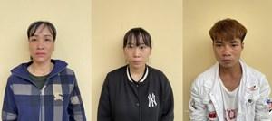 Quảng Ninh: Phá rừng trồng quế, 3 người bị truy tố
